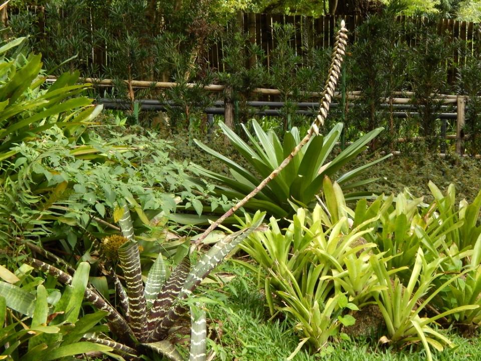 botanical garden, Curitiba - March '14