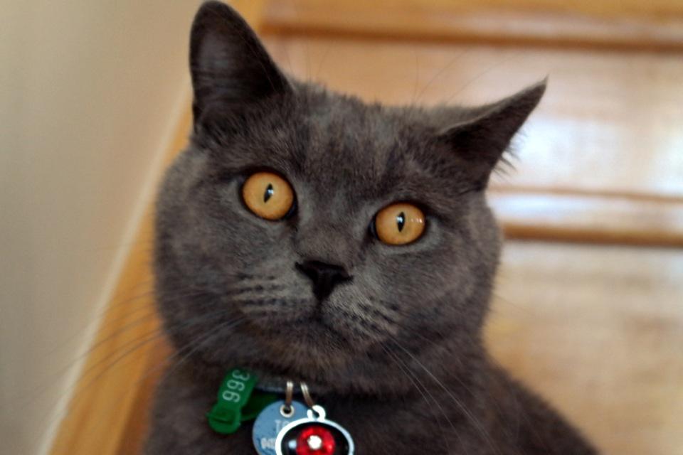 He is a lovely cat, isn't  he?